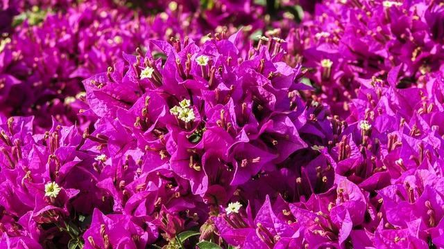 Tavasz Cipruson